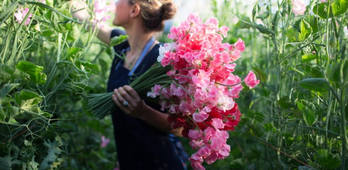 Floret_How-To-Grow-Sweet-Peas-1-1500x736